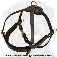 Exclusive everyday lifetime leather harness