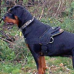 Absolutely safe easy walking nylon harness
