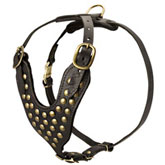 Studded Walking dog harness- Rottweiler harness