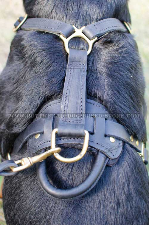 Well-Designed Leather Dog Harness Stitched in Major Points