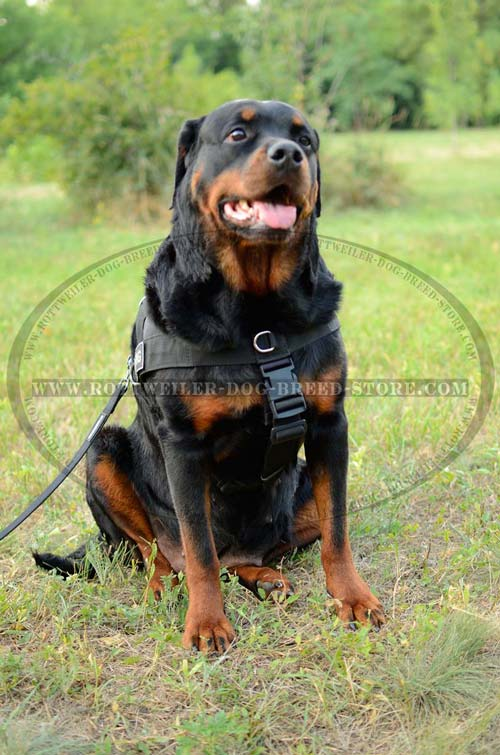 Rottweiler Harness Nylon Ideal for Search and Rescue Work