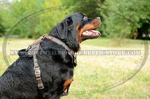Leather Dog Harness with Wide Straps Strong for Rottweiler