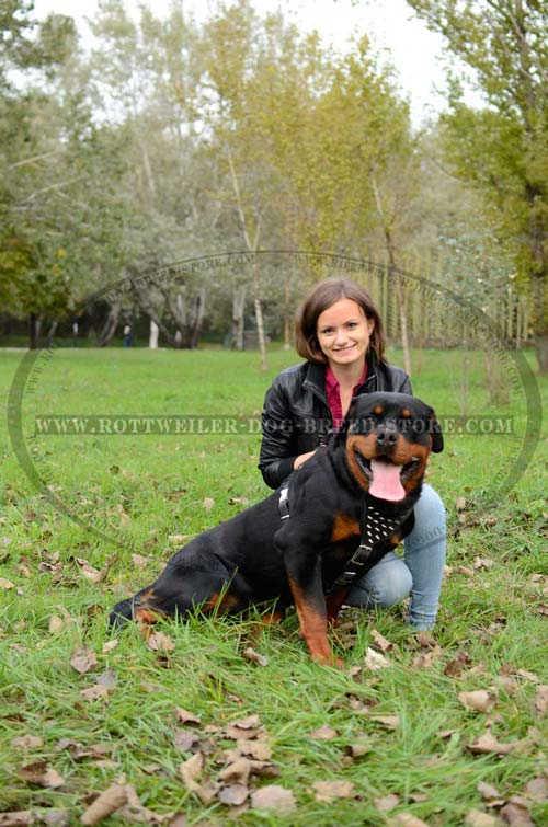 Walking Leather Dog Harness Durable Dependable  for Rottweiler