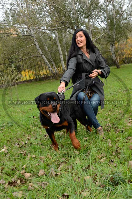 Rottweiler Harness Fully Leather Ideal for Pleasant Walking