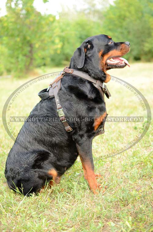 Dog Harness Leather Extremely Comfortable for Rottweiler's Regular Wear
