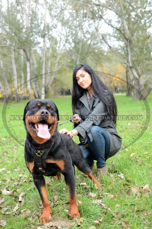 Well-Made Leather Dog Harness for Rottweiler Walking