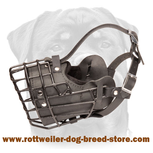 Rottweiler wire dog muzzle for winter