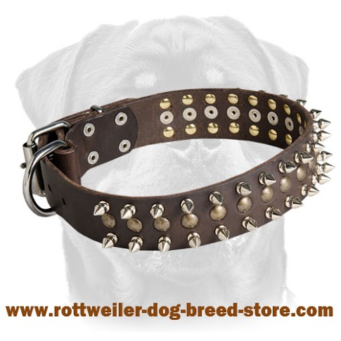 Leather dog collar for Rottweiler