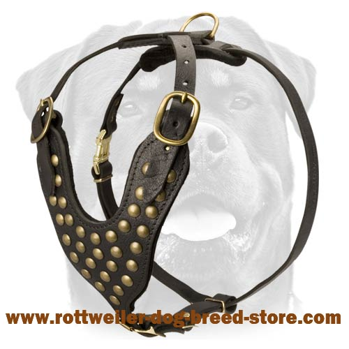 Luxury Studded Walking Dog Harness - Rottweiler Leather Worthy Harness