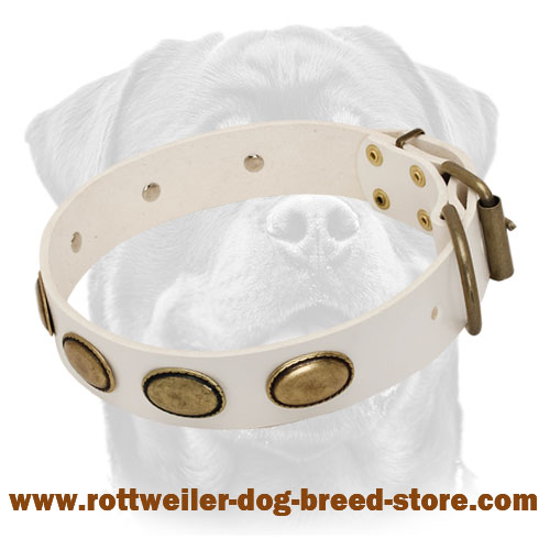 Exclusive White Leather Dog Collar with Brass Oval Plates