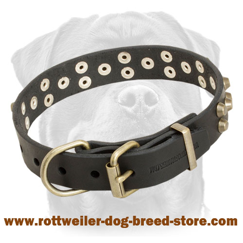 Stylish Leather Rottweiler Collar with Brass Pyramids for Walking