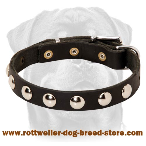 Exclusive Leather Dog Collar with Round Nickel-Plated Studs