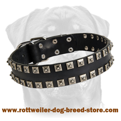 "New Leather Dog Collar - Fashionable Exclusive Design - ""Caterpillar"""