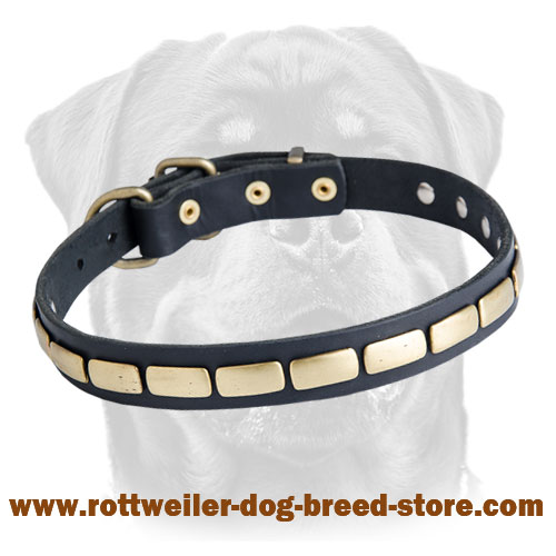Special Leather Dog Collar Adorned with Brass Plates for Rottweiler