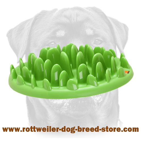 "Green ""Grassy"" Glade for Normal Healthy Nutrition of Rottweiler"