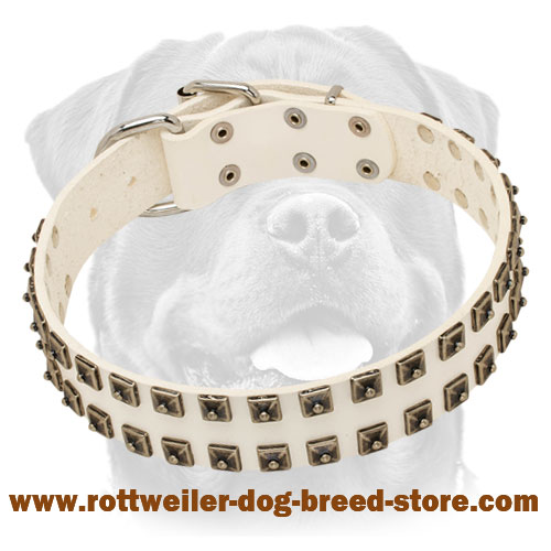 White Leather Dog Collar with Old Nickel Square Studs for Everyday Walks - NEW OFFER