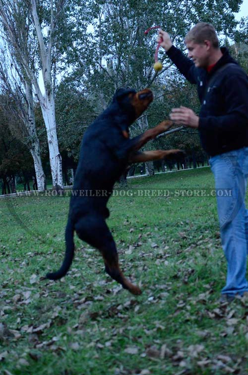 K9 Ball with Rope-Activity for Agile Rottweilers