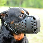 Agitation training  Rottweiler Muzzle