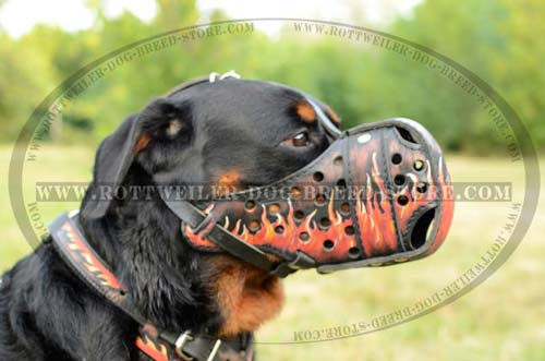 Superior Dog Muzzle For Everyday Wear