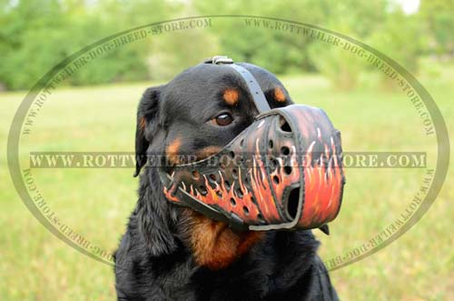 Amazing Rottweiler Muzzle Provides Good Fit