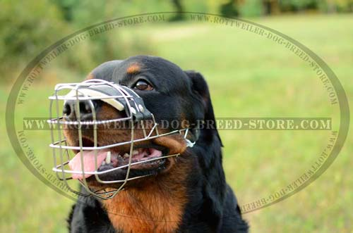 Adjustable Rottweiler Muzzle
