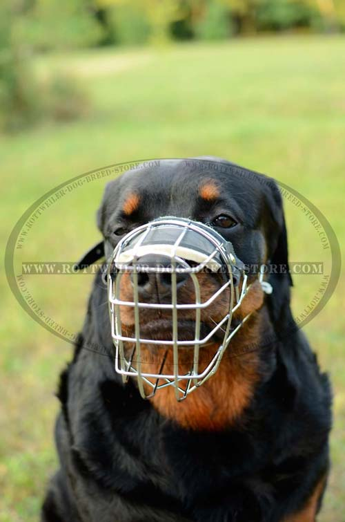 Custom Made Multipurpose Cage Dog Muzzle