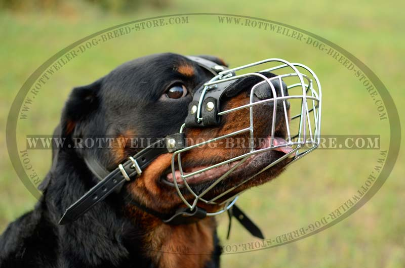 exclusive dog muzzle