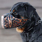 Hand painted by our artists leather Muzzle Dondi Plus