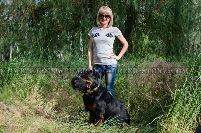 Dog Rottweiler Training Dog Rottweiler Trainin...