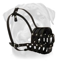 Rottweiler muzzle suitable for numerous purposes