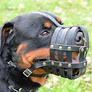 Rottweiler in Light Weight Super Ventilation Muzzle