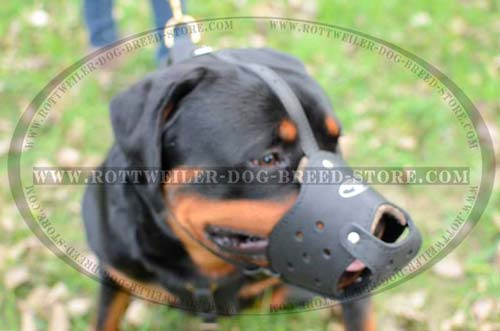 Comfortable Leather Dog Muzzle