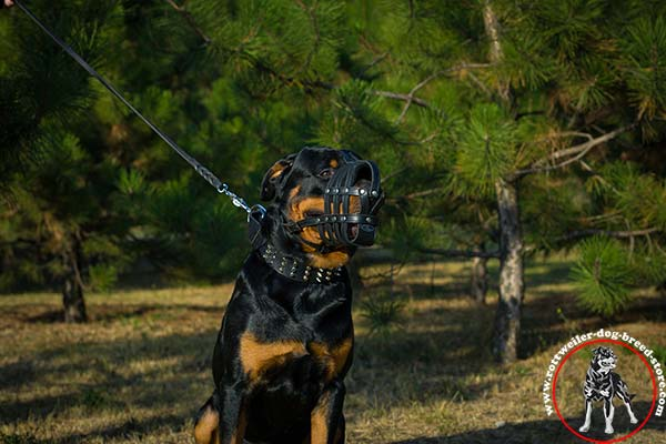 Rottweiler leather muzzle for free breathing