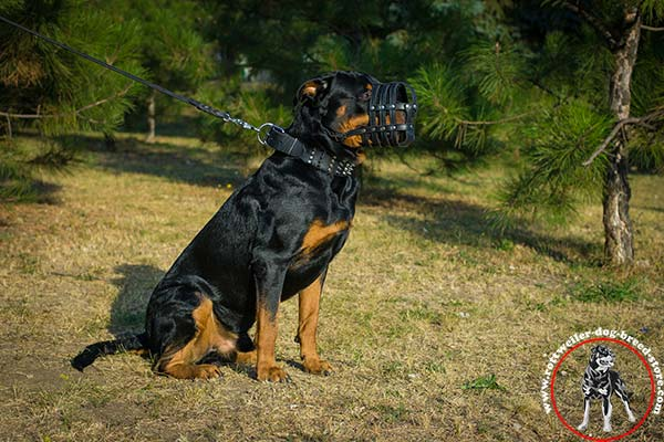 Nose padded Rottweiler leather muzzle