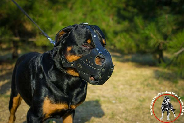 Easy to breathe Rottweiler leather muzzle
