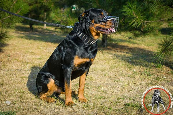Rottweiler muzzle for long walks