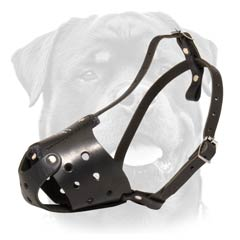 Amazing leather dog muzzle
