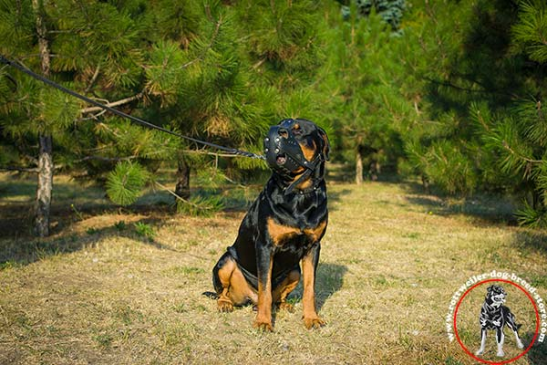 Riveted Rottweiler leather muzzle