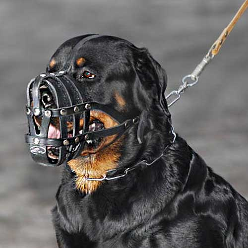 Buy Today Leather Basket Muzzle Rottweiler Breed Ventilation Muzzles