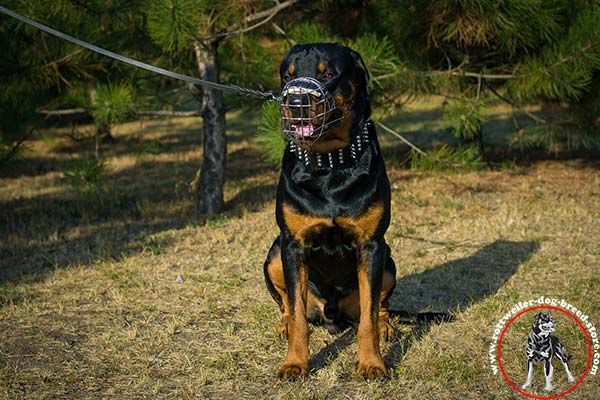 Rottweiler muzzle with padding