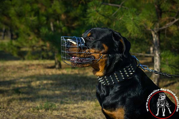 Rottweiler metal muzzle with spacious cage