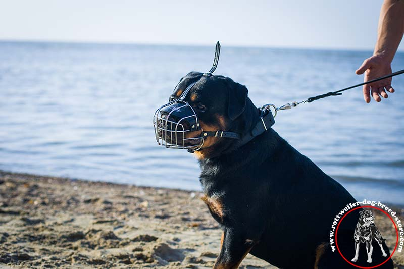 ventilated rottweiler muzzle