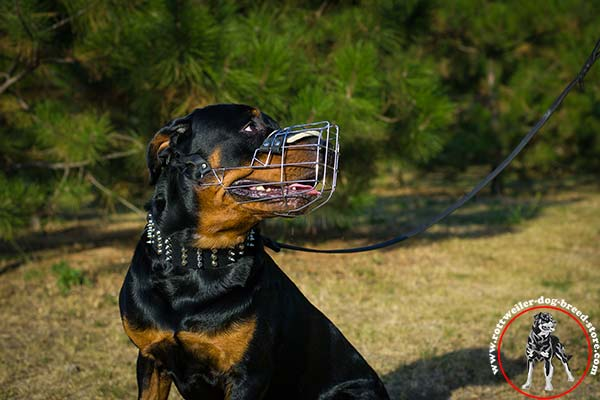 Wire cage Rottweiler muzzle