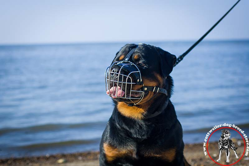 strong wire cage rottweiler muzzle
