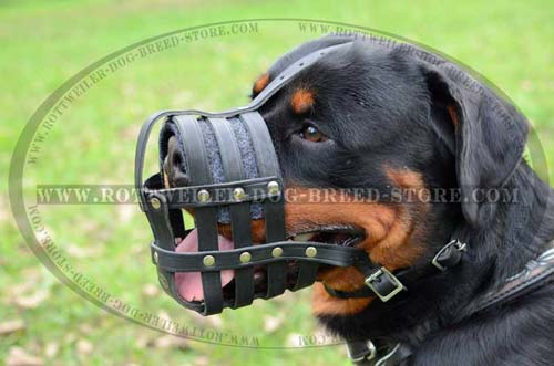 Super Strong Leather Dog Muzzle