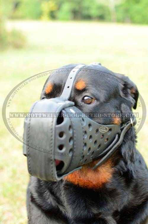 Training Leather Rottweiler Muzzle Reinforced for Protection