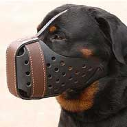 Leather dog muzzle for Rottweiler