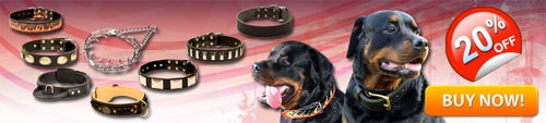 Hand Crafted Rottweiler Collars For Sale