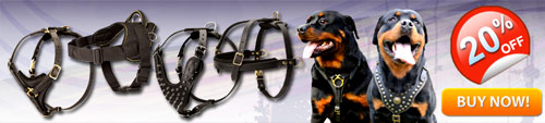 Heavy Duty Rottweiler Harnesses