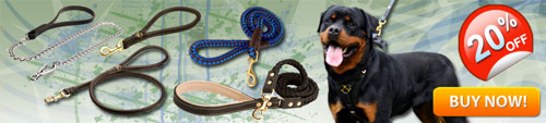 Great Exclusive Rottweiler Leashes